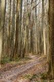 Лиственный лес осенью Дорога сухих листьев среди молодых дубов Предпосылка осени сезонная Стоковая Фотография RF
