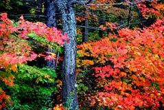 листво Англии новое стоковая фотография rf