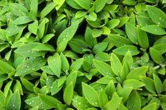 листво влажное стоковое изображение rf