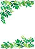 листво граници Стоковые Изображения RF