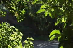 листво детали Стоковые Изображения RF