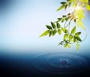 Листво и падения падая в воде Стоковая Фотография