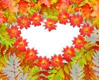 Листво осени Золотистая осень Стоковое Фото