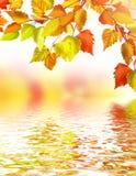Листво осени Золотистая осень Стоковые Фото