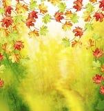 Листво осени Золотистая осень Стоковые Изображения