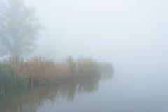 Листво осени и туман утра в пуще Стоковое Изображение