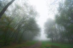 Листво осени и туман утра в пуще Стоковая Фотография