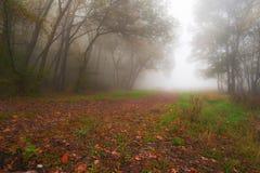 Листво осени и туман утра в пуще Стоковые Изображения