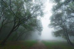 Листво осени и туман утра в пуще Стоковое Изображение RF