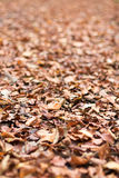 Листво осени Листья осени Стоковые Фото