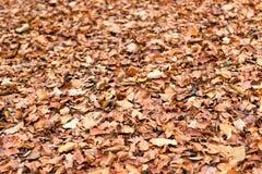 Листво осени Листья осени Стоковые Фотографии RF