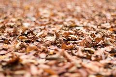 Листво осени Листья осени Стоковое фото RF