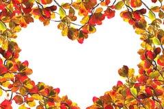 листво осени над красной белизной Стоковое Изображение
