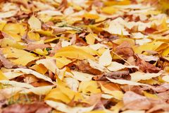 Листво осени Предпосылка с листьями осени красочными Backgrou Стоковое Фото