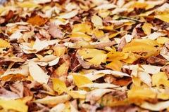 Листво осени Предпосылка с листьями осени красочными Backgrou Стоковые Изображения