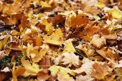 Листво осени Предпосылка с листьями осени красочными Backgrou Стоковые Фотографии RF
