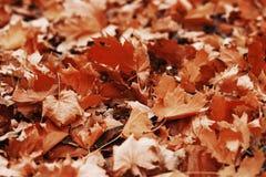 Листво осени Предпосылка с листьями осени красочными Backgrou Стоковое фото RF