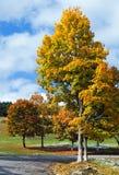 Листво осени цветастое около дороги горы Стоковая Фотография RF