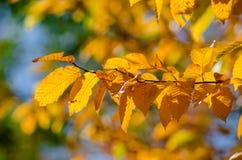 листво осени цветастое стоковая фотография