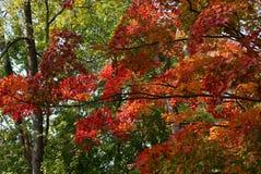 листво осени цветастое стоковое изображение rf