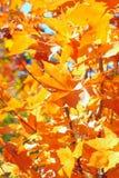 листво осени Стоковое Изображение