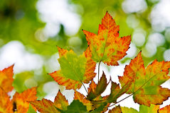 листво осени Стоковые Фото