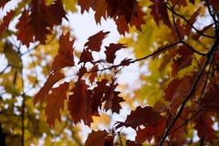 листво осени Стоковое фото RF