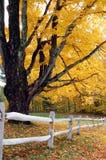 листво осени Стоковое Фото
