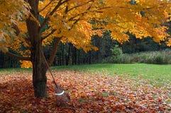 листво осени Стоковое Изображение RF