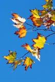 листво осени Стоковая Фотография RF