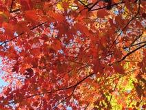 листво падения Англии новое стоковые фото