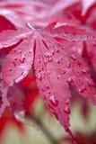 листво падения Стоковое фото RF