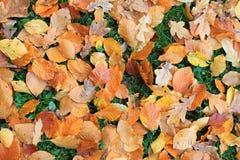 листво падения Стоковые Изображения