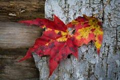 листво падения Стоковые Изображения RF