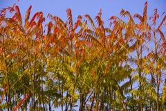 листво падения Стоковое Изображение