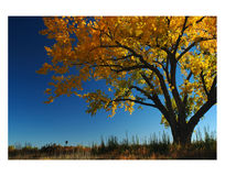 листво падения Стоковая Фотография RF