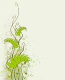 листво предпосылки Стоковые Фото
