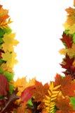 листво сентябрь Стоковое Изображение RF