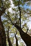 листво смотря вал вверх Стоковые Изображения RF