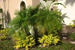 листво тропическое Стоковое Изображение RF