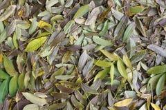 листво Стоковая Фотография