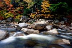 листво стоковая фотография rf