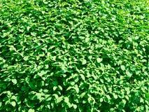 листво Стоковое Изображение RF