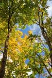 листво Стоковые Фотографии RF
