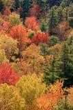 листво ontario осени Стоковая Фотография RF