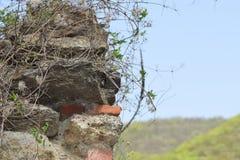 Листовая капуста Markovo крепости fo части старая стоковое фото rf