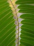 Листовка Стоковое фото RF