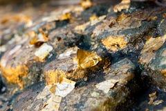Листовое золото покрыло ногу стоковые изображения