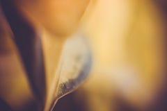 Листовое золото стоковые изображения rf