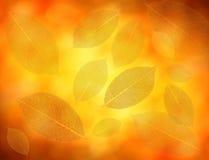 листовые золота предпосылки Стоковые Фото